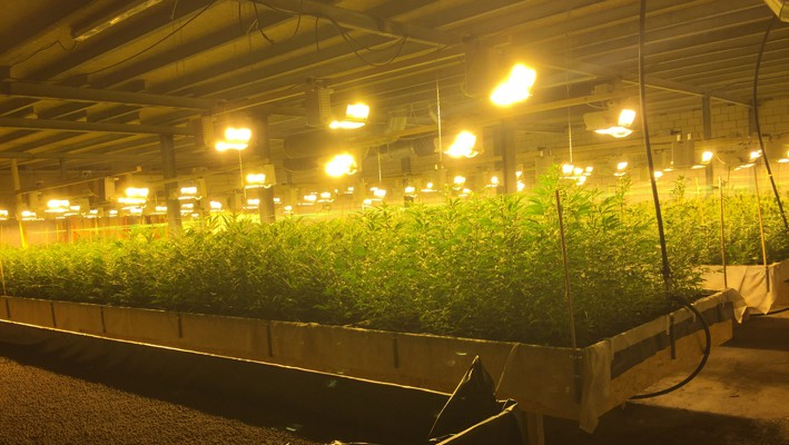Cannabis-Markt